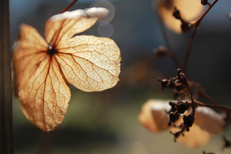 Spring is coming! Beauty In Nature Close-up Day Dry Leafs Flower Fragility Kevät Kuiva Kukka Leaf Vein Leafs Light Nature No People Outdoors Plant Spring Veins