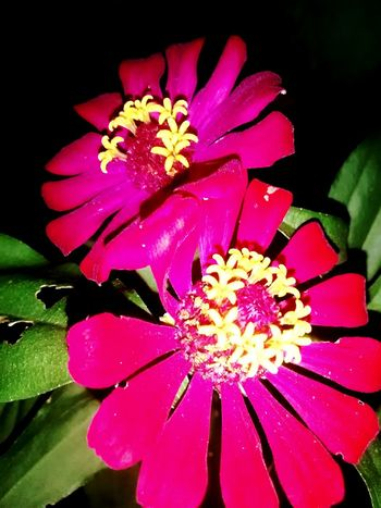 Flowers 💕