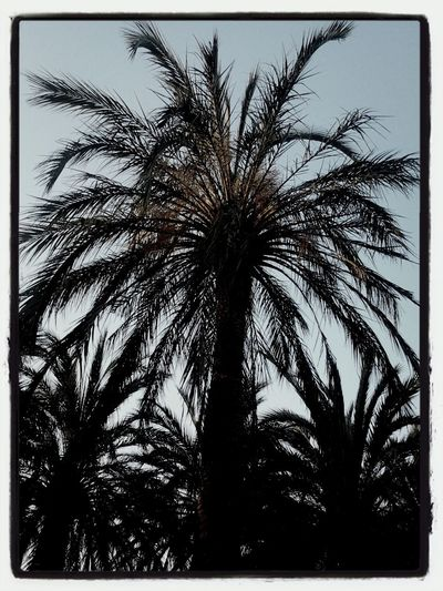 just a palm tree