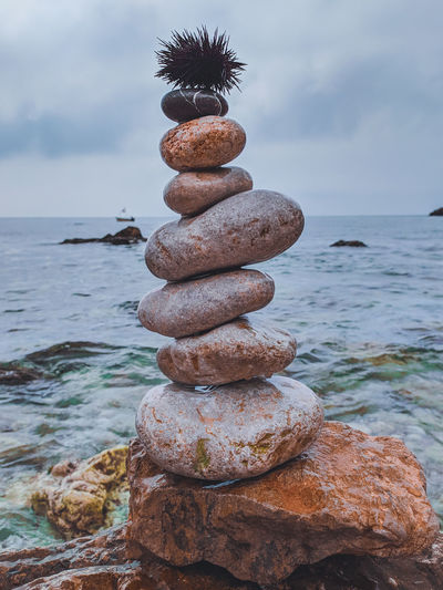Sea urchin over stack of stones at beach
