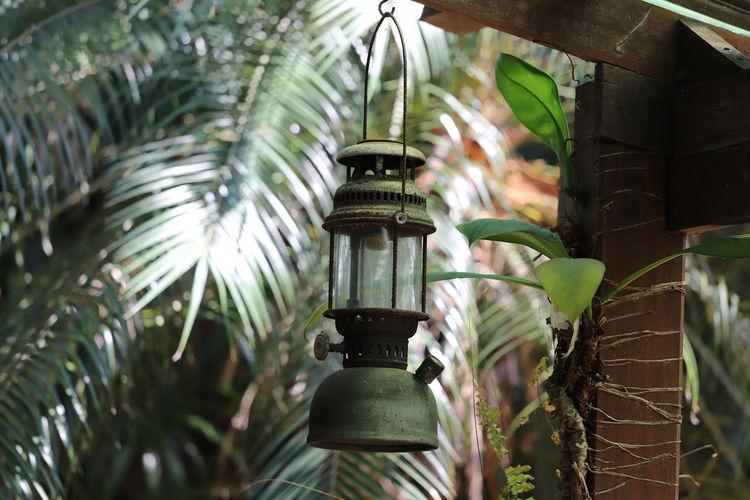 Close-up of lantern on plant