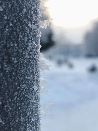 Winter background Winter Background Winter Wonderland Copy Space Macro Photography Cold Days Cold Temperature Frozen Snow Cold Temperature Winter Nature Water Focus On Foreground Frozen No People Ice Outdoors Environment Close-up Plant Snowing Beauty In Nature Day
