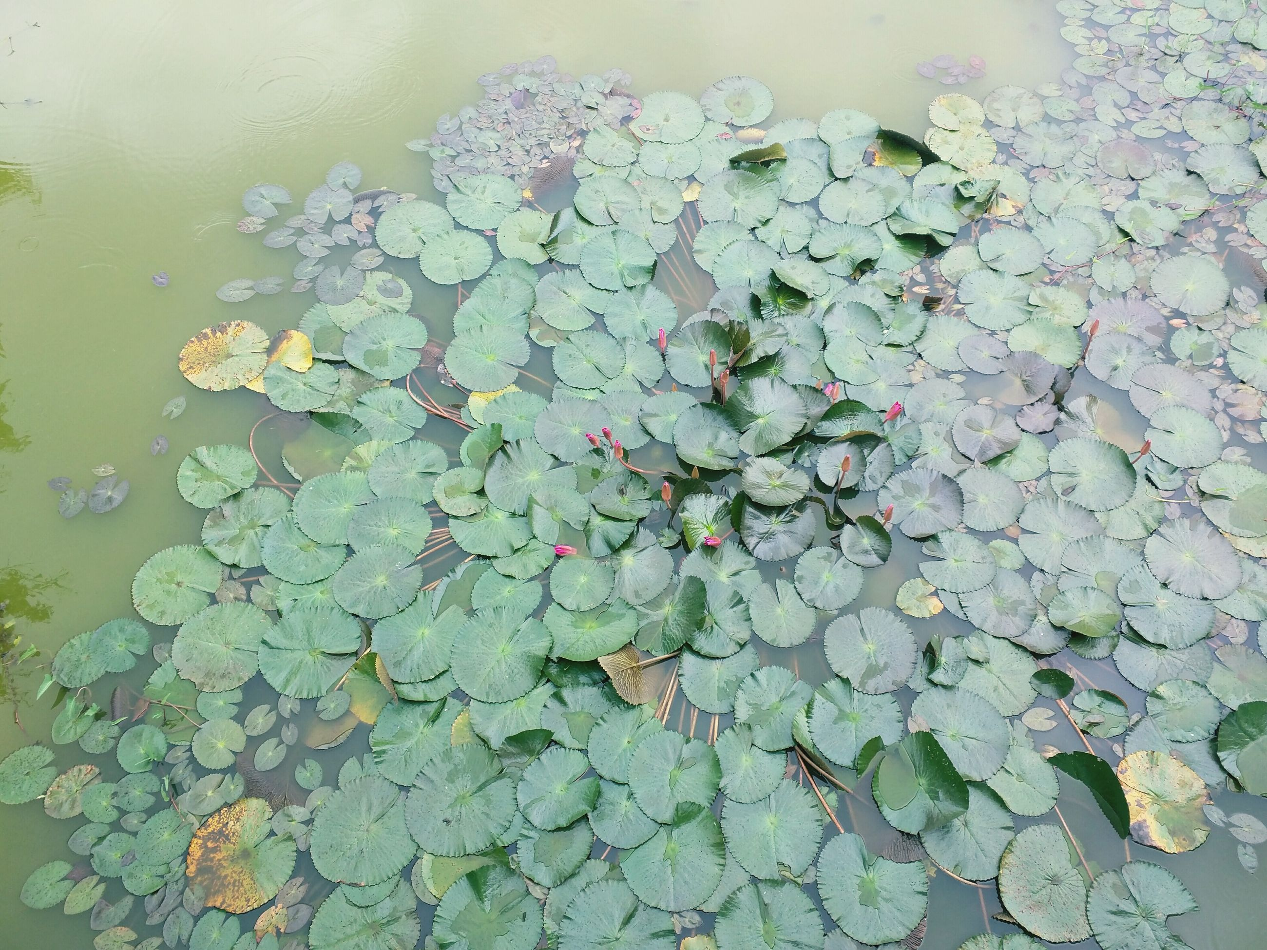 leaf, water, plant, high angle view, growth, green color, nature, leaves, season, fragility, wet, floating on water, beauty in nature, autumn, wall - building feature, pond, day, close-up, flower, no people