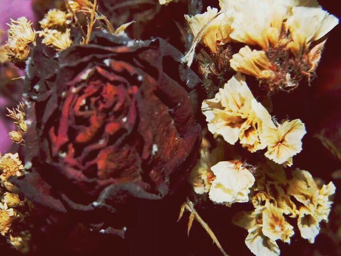 Dead Flowers Velentines Day