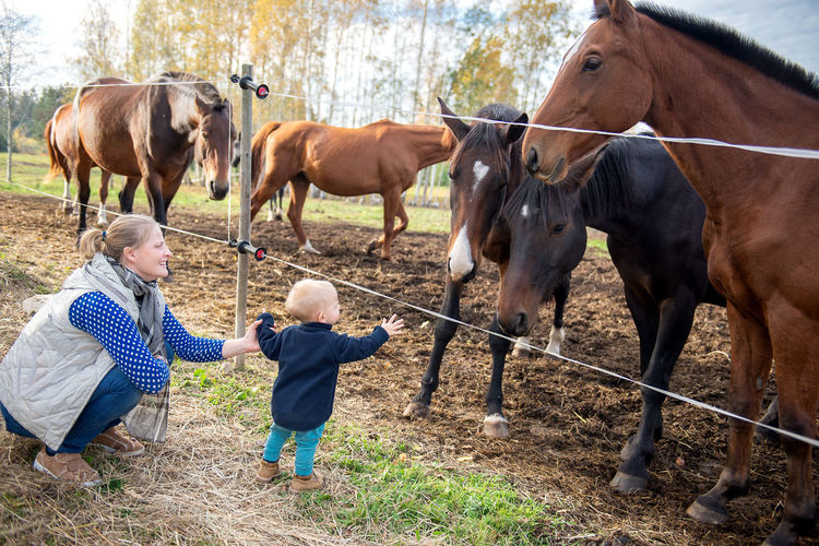 Mother introduces her baby to horses. Mother Kid Kids Kids And Animals  Horses Paddlock Childhood Lifestyles Communication Livestock Farm Farmland Parenthood Baby Babyhood Fence Brown Barrier Herbivorous Boundary People Domestic Animals Pets Outdoors EyeEm Lifestyle