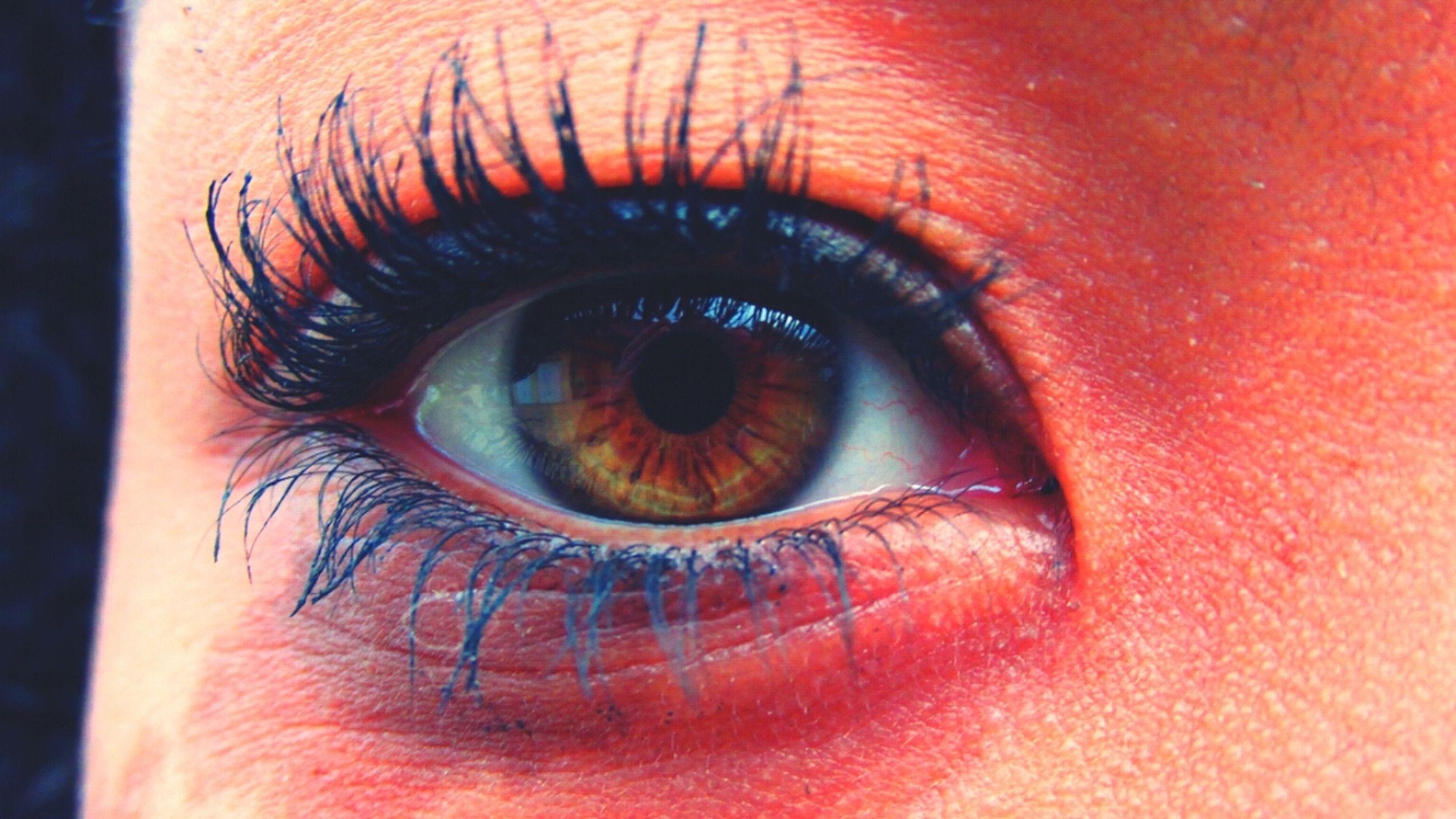 human eye, eyelash, close-up, eyesight, extreme close-up, sensory perception, part of, iris - eye, eyeball, full frame, extreme close up, human skin, portrait, human face, looking at camera, unrecognizable person, macro