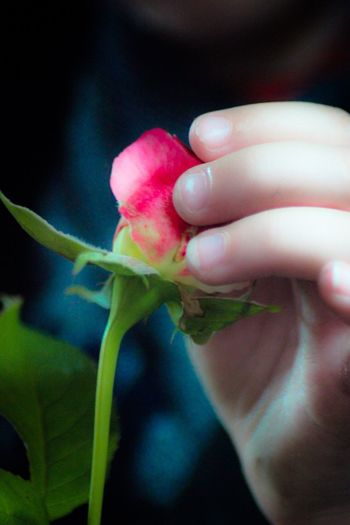 Roses_collection Discovering Nature Toddler  Baby Hand Flowers_collection Learning From Nature Flower Growth Fragility One Person Close-up Freshness Petal Focus On Foreground Plant Real People Holding Nature Outdoors Beauty In Nature Day Human Hand Flower Head Human Body Part