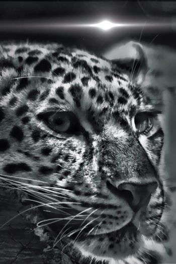 Not my photo ...edit I did for a fellow stream zoo friend Mert Bw_collection Minimal