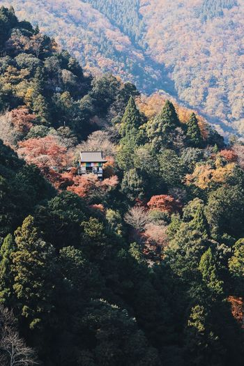Autumn Autumn colors Autumn Leaves Architecture Beauty In Nature Building Exterior Built Structure Day Foliage Forest Green Color Growth High Angle View Kyoto Land Lush Foliage Mountain Nature No People Outdoors Plant Scenics - Nature Tranquil Scene Tranquility Tree The Great Outdoors - 2018 EyeEm Awards