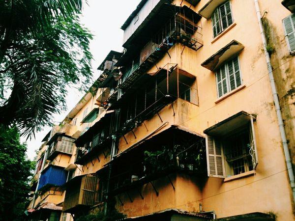 Pictures Of Me :)  Enjoying Life Check This Out Hello World Vietnam Leaf Tree Sự Phạm 2 Xuân Hoà Vĩnh Phúc KTX