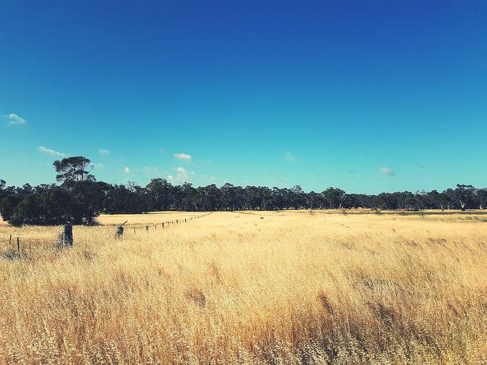 Riverland Farm Life Farming Australia South Australia Summer Dry Land Dry Grass Barossavalley Murray Valley Grass Hay Country Life