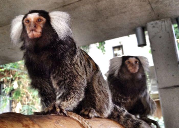 Zoo Hoyerswerda Hoyerswerda Affen