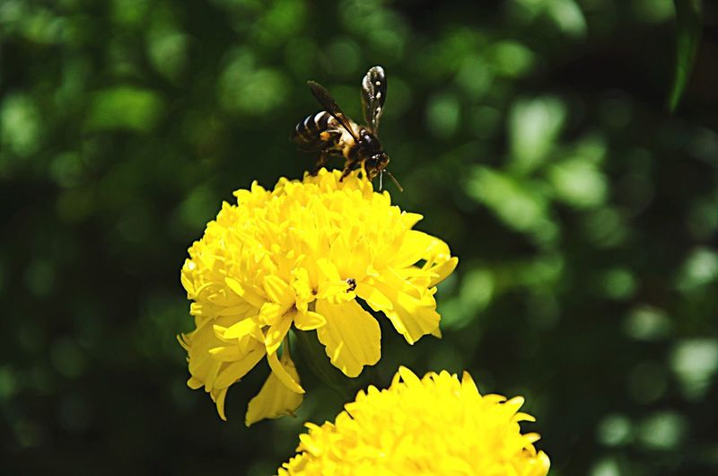 Bees Bees And