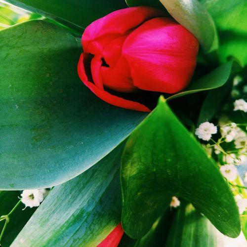 The flowers to my girlfriend Beautiful Macro Israel Sjmike Idf Meizumx4 Flowers Red Green