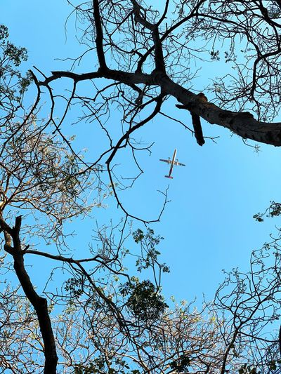 Airoplane Low Angle View Plant Tree Sky No People Nature Branch Beauty In Nature Growth Day Outdoors Clear Sky Tranquility Bare Tree Full Frame Backgrounds Pattern Plant Part Directly Below