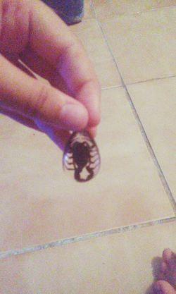 Found my baby! Scorpion