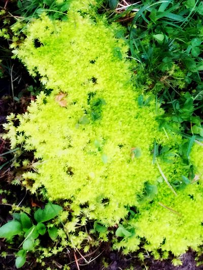 Lemon Lime By Motorola Green Moss Spring Eye4photography  Iphone6plus It's So Green I Couldn't Believe It
