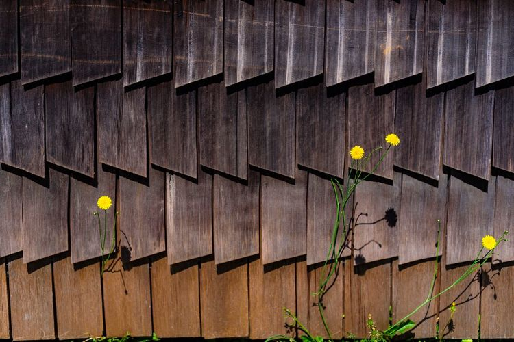 Chiloé con su baño de tejas D750 Nikond750 Nikon Chile Chiloé, Chile Built Structure Yellow Architecture Plant Growth No People Aspirations Day Flower Outdoors Close-up Nature
