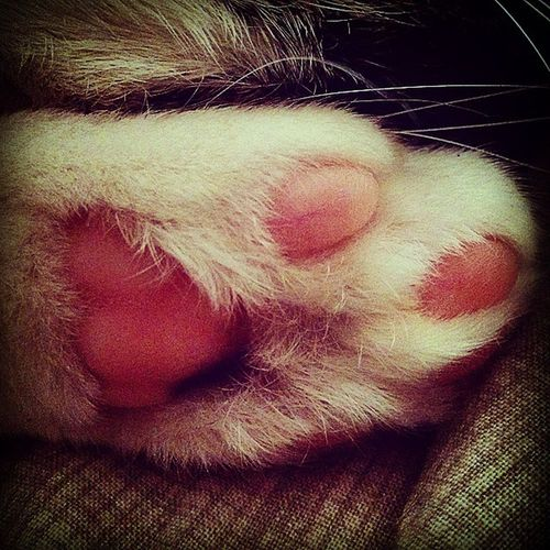 Cat Spugna Goodmorning Catleg Zampa Comemiamitunonmiamanessuno