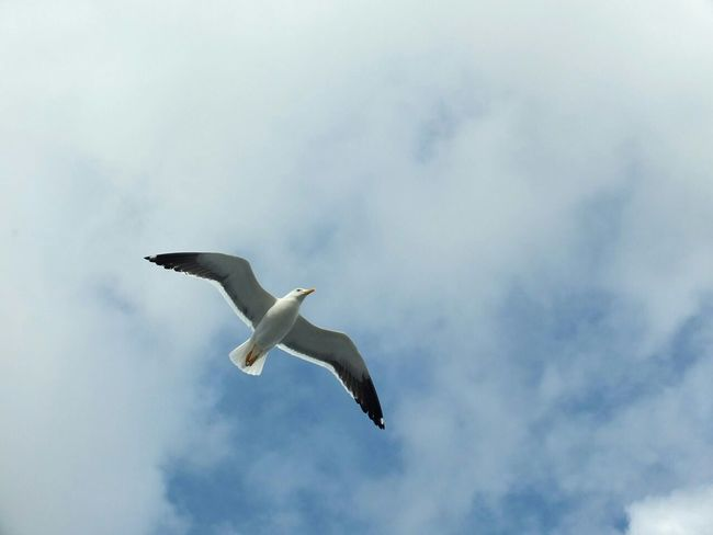 Capture The Moment White Sea Seagull Sky Flyght Ocean Clouds Nature Traveling Solovetskie Ostrova