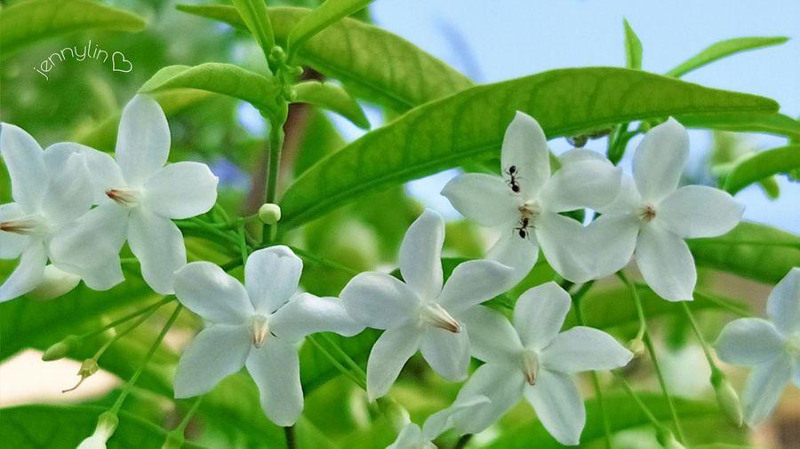 花蟻ˇ🐜相逢.Flower