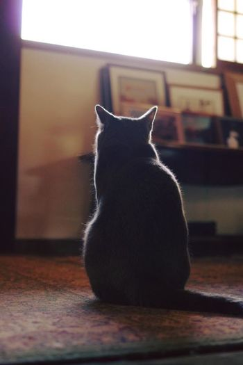Animal Animal Themes Backstyle Cat Focus On Foreground No People Pets Relaxation Sitting Window Wood