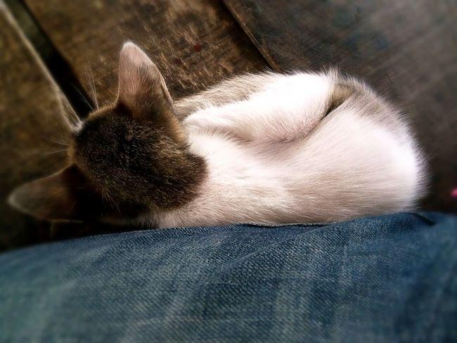 sleeping tom... Pet Photography  Relaxing Sleeping