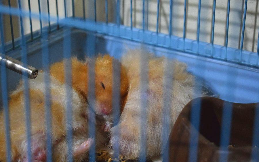 Hamster Syrianhamster Animalphotography Photography EyeEm