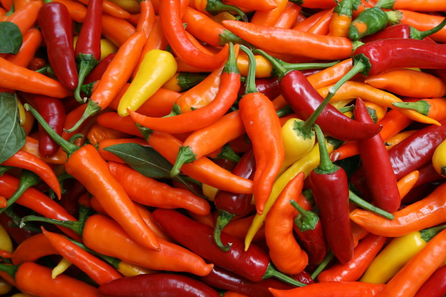 frische Chilis auf dem Obst- und Gemüsemarkt in Venedig Backgrounds Bazaar Chili Pepper Colorful Colorful Nature Food Foodmarket Fresh Vegetable Fresh Vegetables Freshness Hot Large Group Of Objects No People Red Red Chili Pepper Rialto Market Spice Spices Spicy Vegetable Food Stories Summer Exploratorium My Best Travel Photo