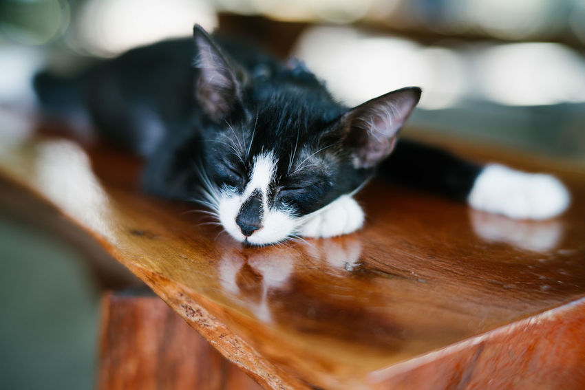 Sleeping cat Animal Themes Cat Domestic Animals Domestic Cat Kitten Lasy Mammal One Animal Pets Sleep Sleeping Sleeping Cat Sleepy Time