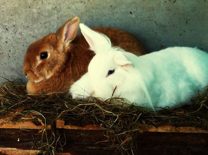 Rabbit Animals