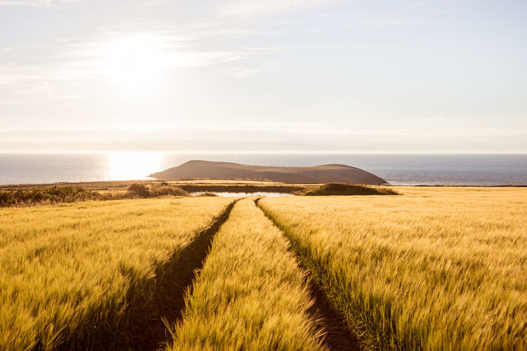 Wales UK Cliffs Wales UK Agriculture Beauty In Nature Cereal Plant Cornfield Day Evening Field Gold Colored Hikingadventures Lake Landscape Nature No People Outdoors Road To Heaven Sea Sea And Sky Sky Summer Sunlight Sunset Tranquil Scene Way