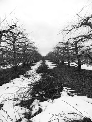 witer orchards Winter Fresh Produce Tending To Crops Tadaa Community Hugging A Tree Streamzoofamily EyeEm Nature Lover EyeEm Best Shots Eye4photography  Vanishing Point