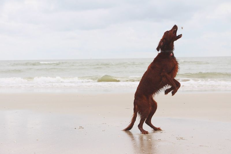 Dog jumping on beach