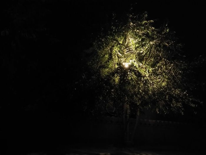 What is the illusion..No People Tree Black Background Outdoors Vitality Lighting Up The Night... Spread Light