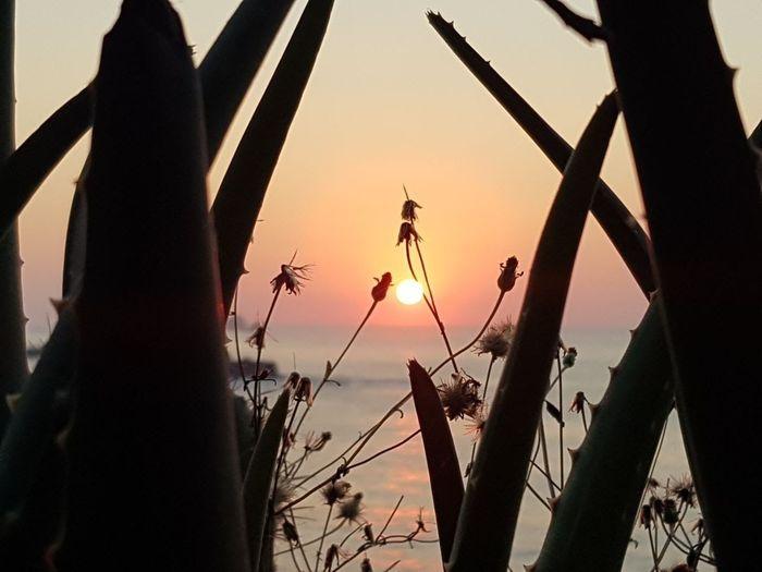 Sunset Rural Scene Sky Day Nature Mexico De Mis Amores Mazunte Amanecer En El Mar