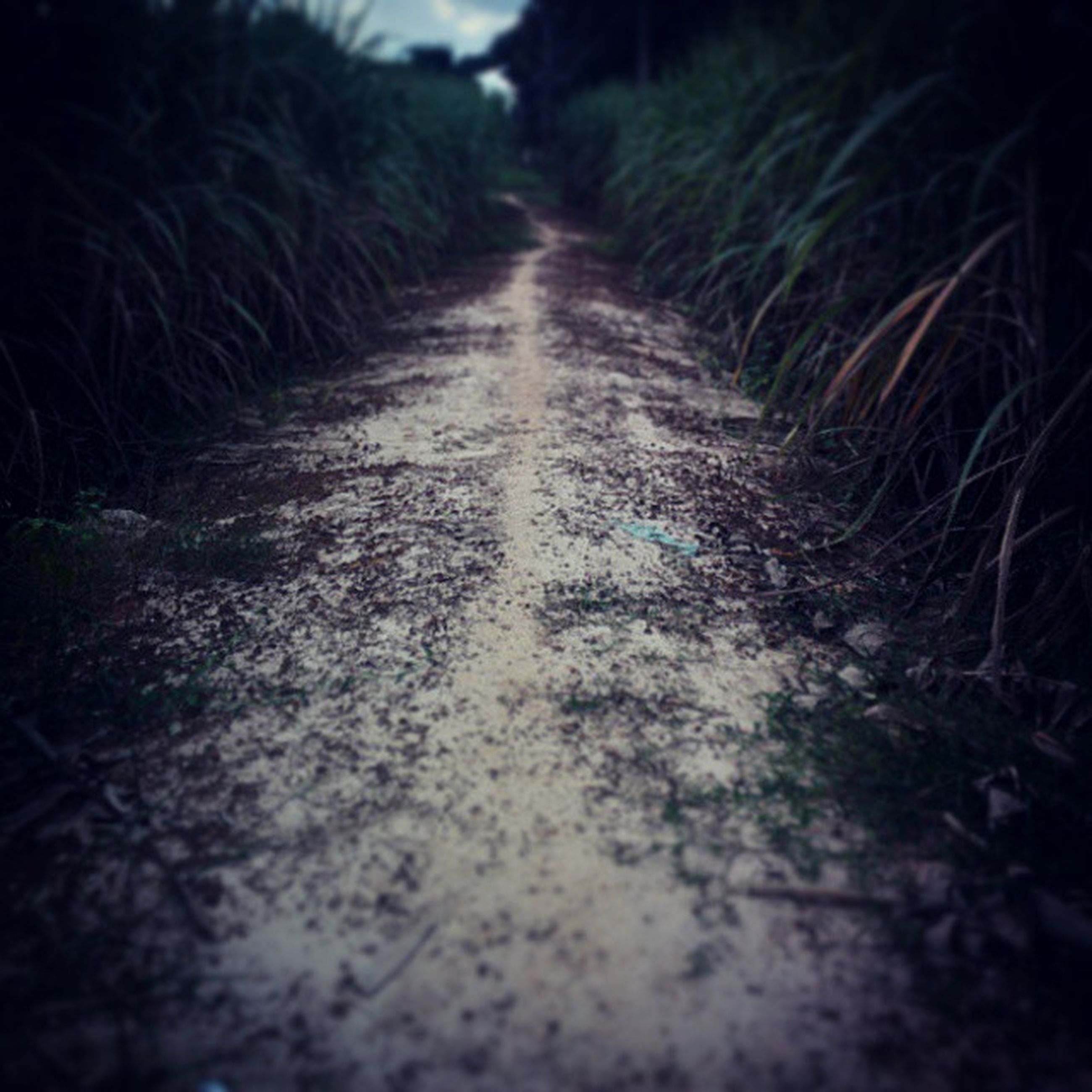 the way forward, diminishing perspective, vanishing point, surface level, road, transportation, tree, selective focus, nature, street, dirt road, tranquility, empty road, outdoors, footpath, no people, long, day, narrow, growth