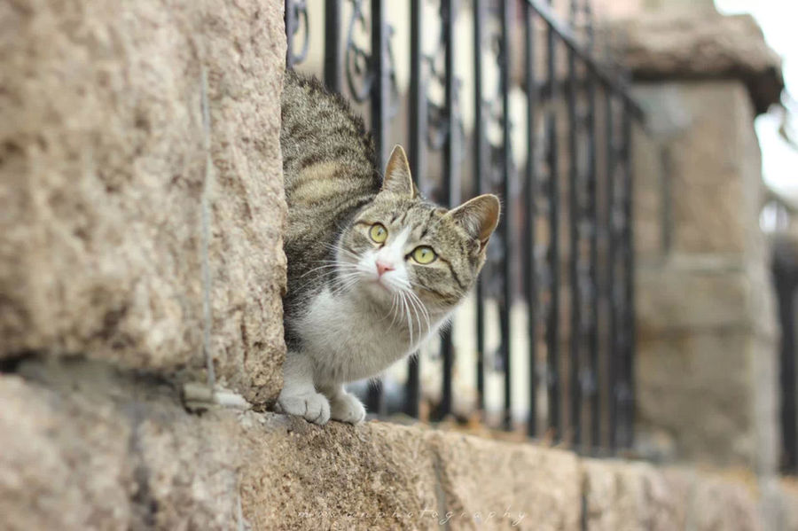 Cat www拍外景的时候突然窜出来哒