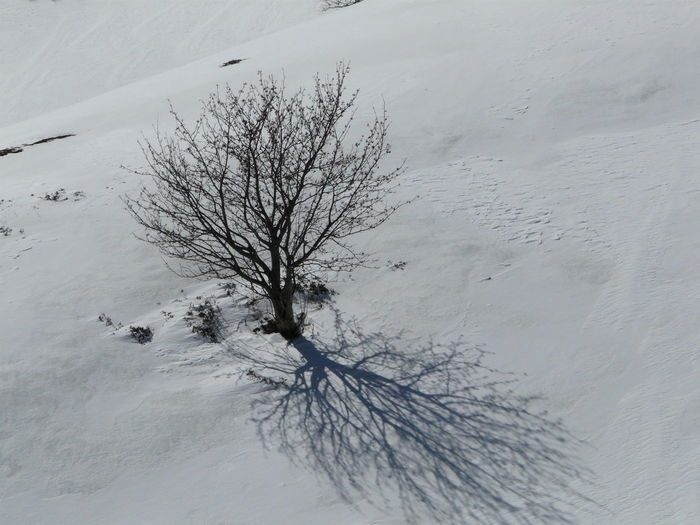 Bare tree on snow covered land