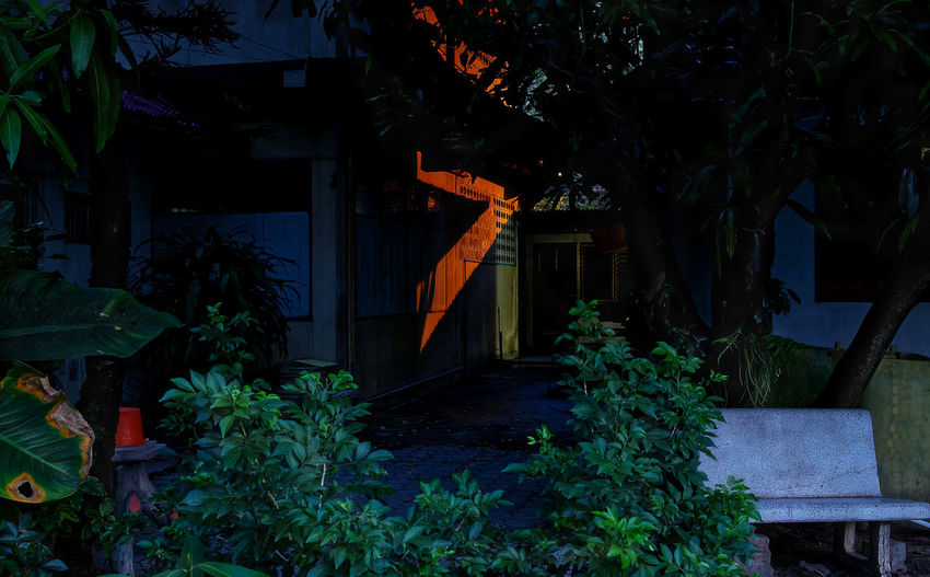Plants growing outside house in yard at night