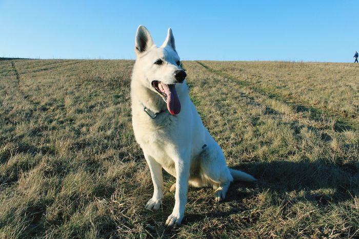EyeEmNewHere Dog One Animal Doglife In Nature  Dog In Grass One Man And His Dog Man In Background Countryside White Dog Under Blue Sky Outdoors Pet Portraits The Great Outdoors - 2018 EyeEm Awards