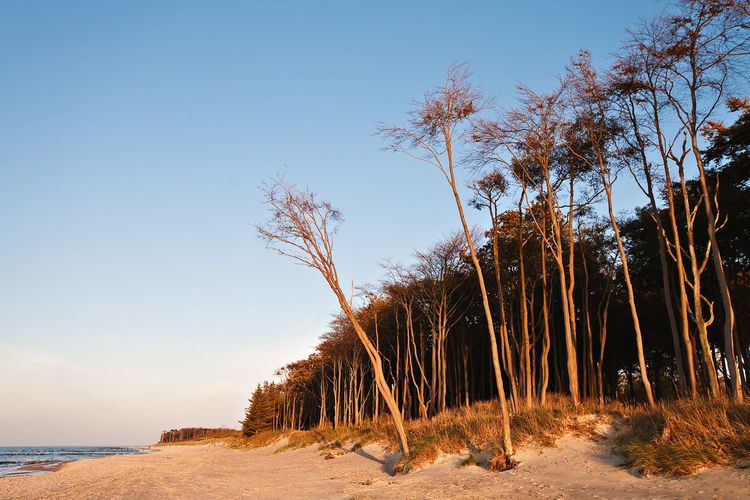 Baltic Sea coast. Beach Beauty In Nature Blue Calm Clear Sky Day Growth Nature No People Non-urban Scene Outdoors Sand Scenics Sea Shore Sky Solitude Surface Level Tall - High Tranquil Scene Tranquility Vacations Weststrand