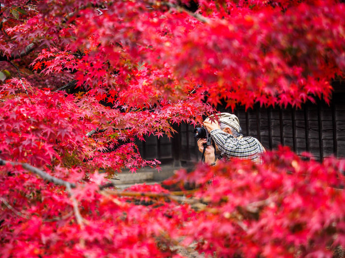 Senior Man Photographing With Camera Seen Through Maple Tree Branches