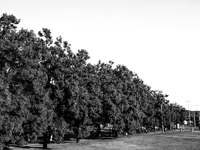 Monochrome Photography Blackandwhite Symmetrical Trees And Sky Small People In Big Places Streetphotography Cityscape Torun, Poland