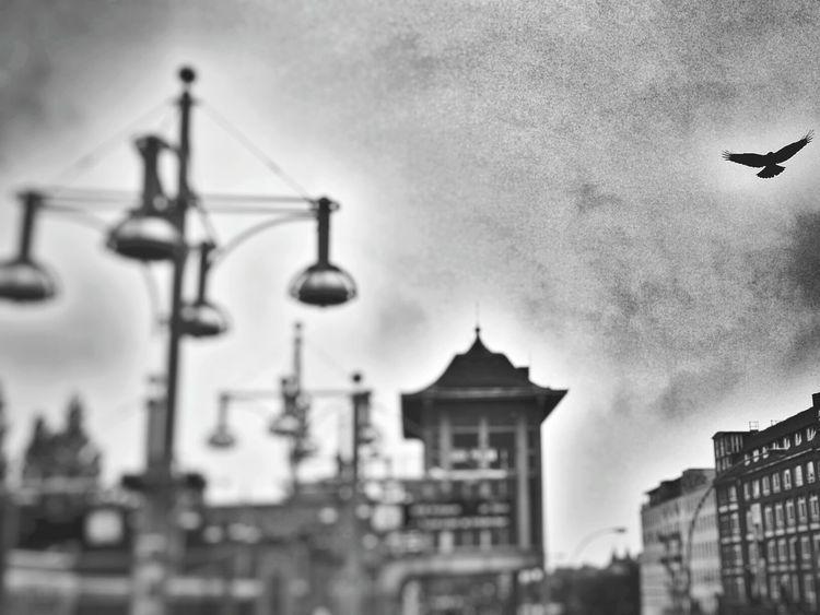 Blackandwhite City Bird Berliner Ansichten Berlin Capture Berlin