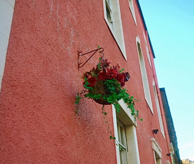 Sweet n Sandy Pink Red Rouge Rosé Building Exterior Architecture Built Structure Red Residential Building No People Outdoors House Day Growth Ivy Scotland Leith Edinburgh EyeEmNewHere EyeEm Gallery EyeEm Nature Lover EyeEm Best Shots EyeEm Streetphotography 100 Days Of Summer