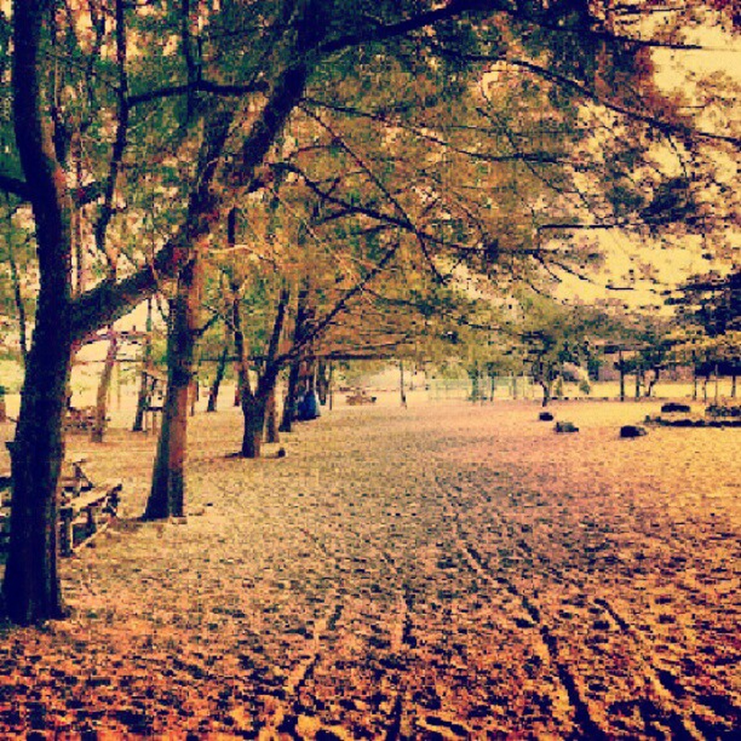 tree, autumn, tranquility, change, tranquil scene, season, nature, beauty in nature, branch, tree trunk, scenics, growth, leaf, park - man made space, orange color, idyllic, outdoors, footpath, landscape, treelined