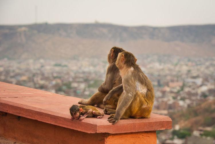 Monkey sitting on a rock