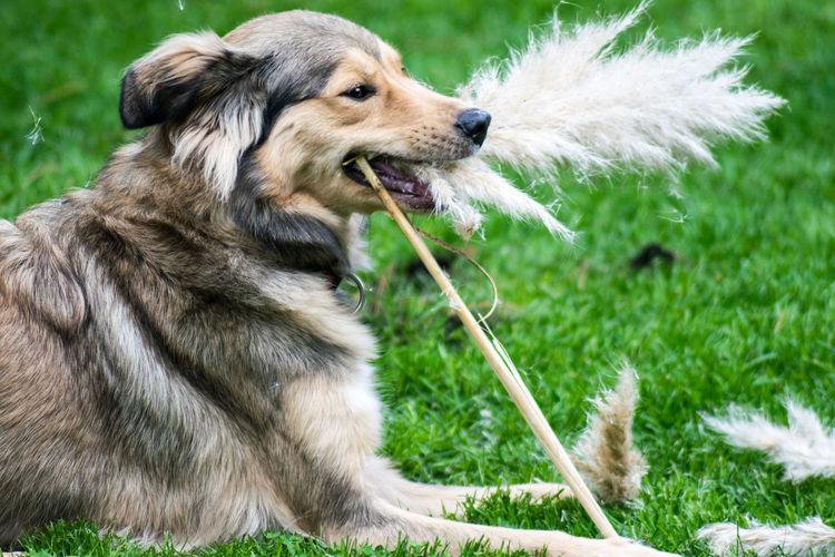Close-up of dog sitting on grass
