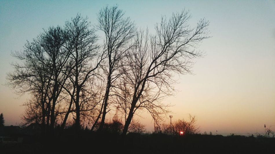 Sunset Nature Tree Sky No People Sun LG G4 Lg G4 Photography Smartphone Photography Winter No Snow In Winter